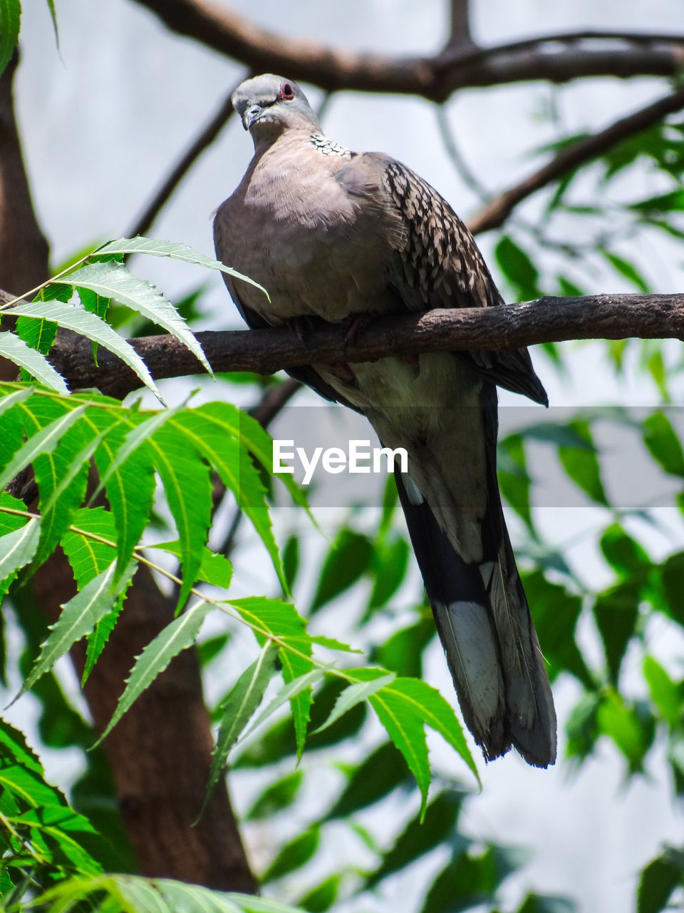 bird, vertebrate, animal, animal themes, animals in the wild, one animal, animal wildlife, plant, perching, tree, branch, no people, nature, leaf, low angle view, plant part, day, focus on foreground, close-up, green color, outdoors, eagle