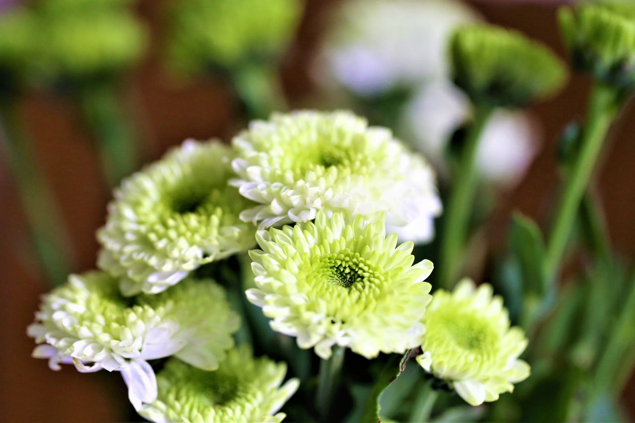 flower, flowering plant, plant, vulnerability, beauty in nature, fragility, growth, freshness, close-up, flower head, inflorescence, petal, focus on foreground, green color, nature, day, no people, selective focus, leaf, botany