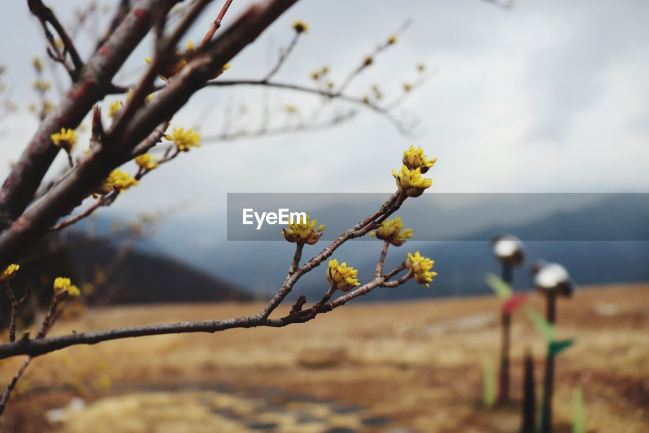 plant, focus on foreground, growth, flower, beauty in nature, flowering plant, nature, day, tree, branch, fragility, no people, vulnerability, selective focus, close-up, sky, freshness, outdoors, land, tranquility