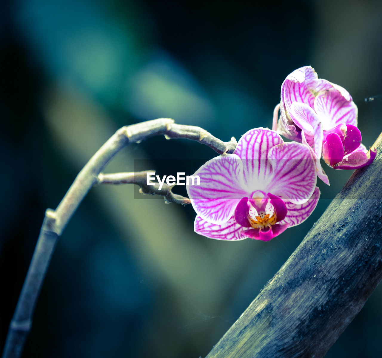flower, fragility, petal, nature, beauty in nature, growth, flower head, pink color, focus on foreground, close-up, no people, freshness, day, plant, outdoors, blooming