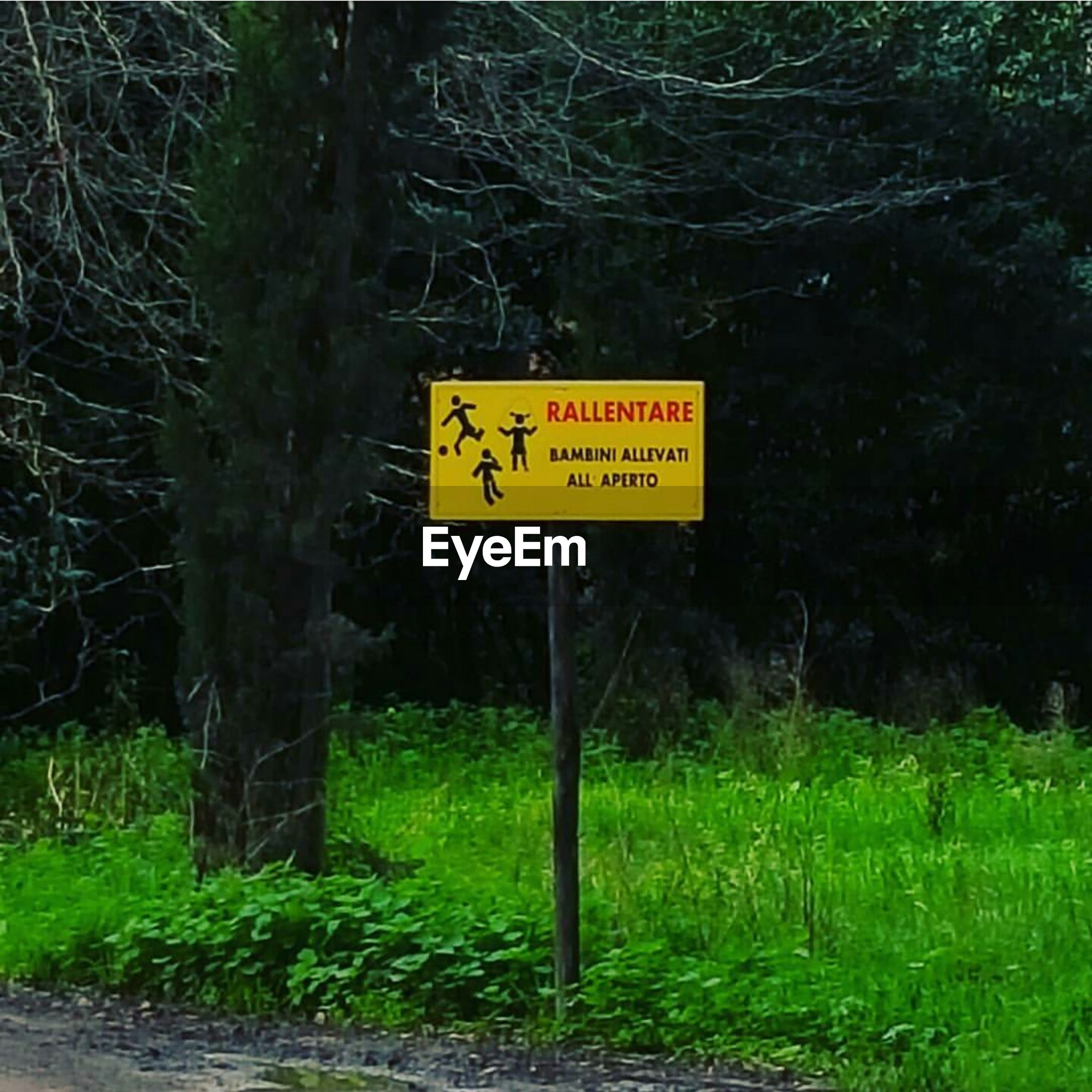 tree, text, sign, yellow, communication, nature, outdoors, no people, forest, road sign, beauty in nature, grass, day