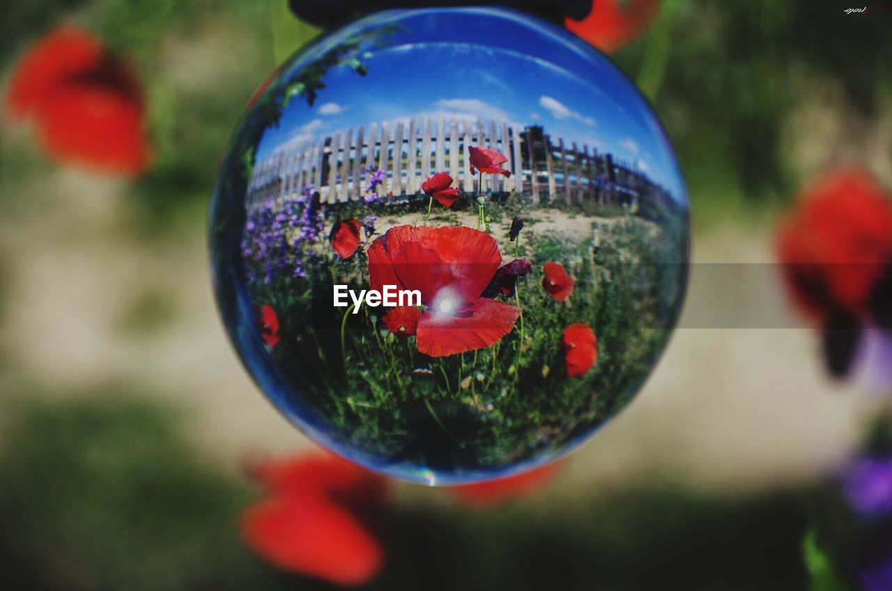 close-up, focus on foreground, sphere, plant, flower, flowering plant, vulnerability, nature, fragility, selective focus, transparent, no people, day, decoration, reflection, beauty in nature, outdoors, freshness, glass - material, shape, flower head