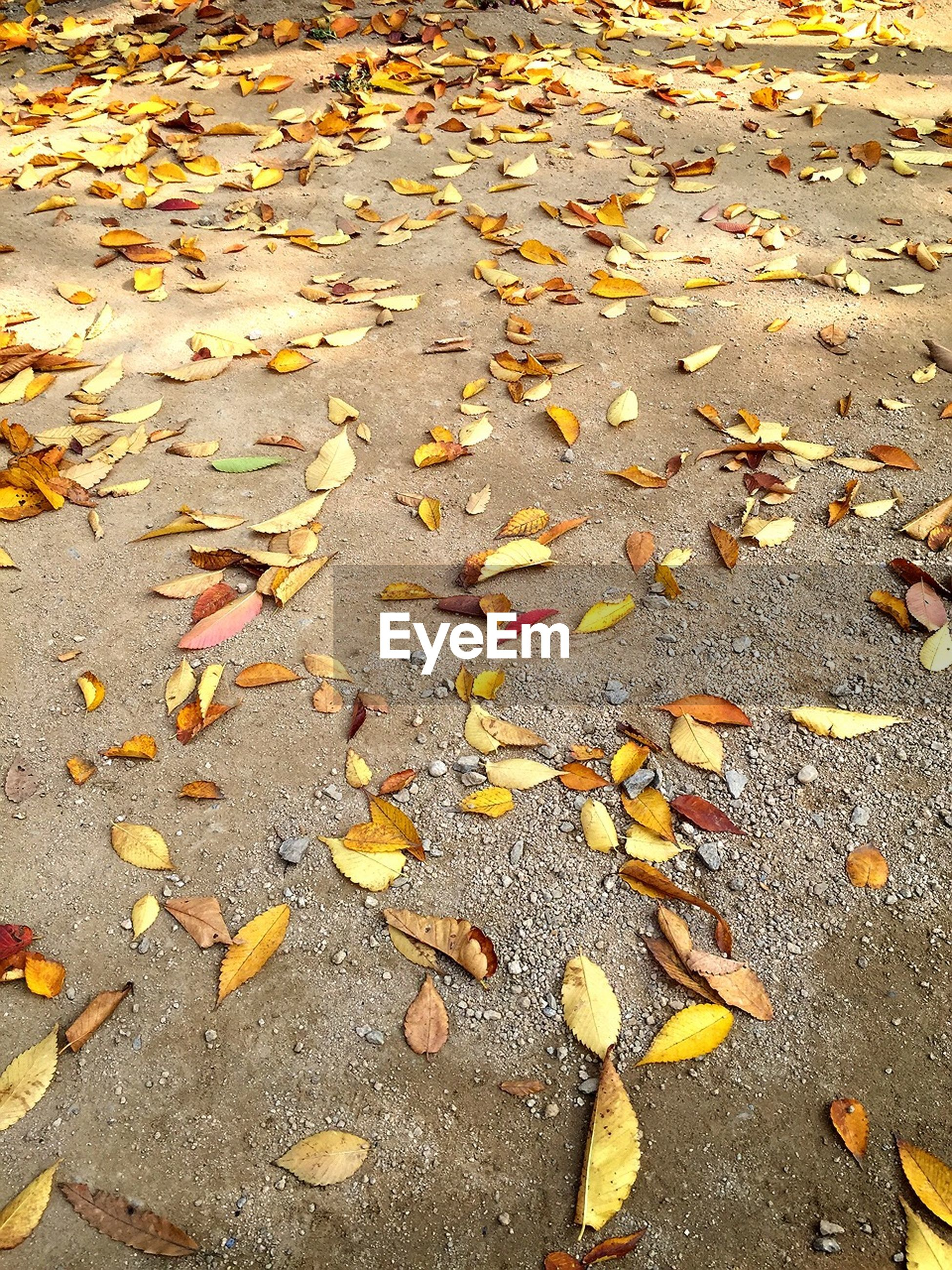 autumn, change, leaf, season, leaves, fallen, dry, street, yellow, high angle view, asphalt, falling, nature, road, abundance, outdoors, day, tranquility, surface level, no people