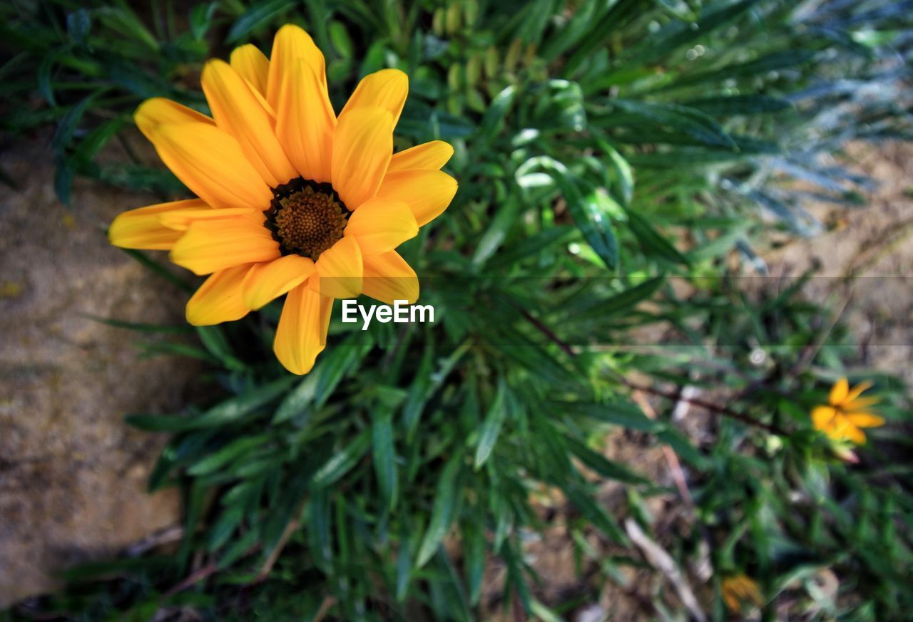 flower, yellow, petal, fragility, nature, beauty in nature, growth, flower head, freshness, plant, blooming, no people, day, outdoors, close-up