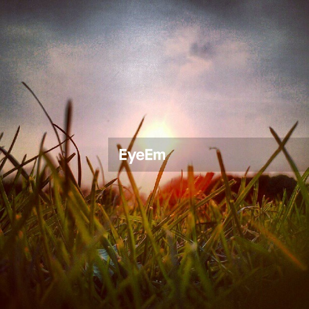grass, sunset, sun, growth, nature, field, sky, no people, summer, outdoors, beauty in nature, close-up, day