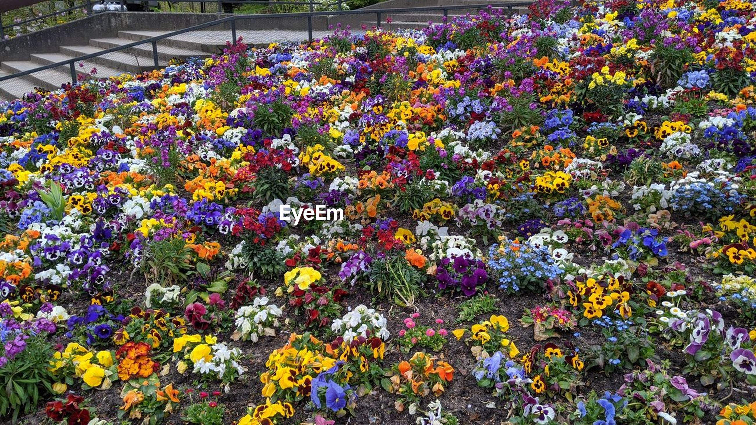 flowering plant, flower, plant, multi colored, freshness, beauty in nature, fragility, nature, growth, day, no people, abundance, high angle view, variation, outdoors, garden, flowerbed, yellow, botany, park, springtime, close-up, flower head, wildflower