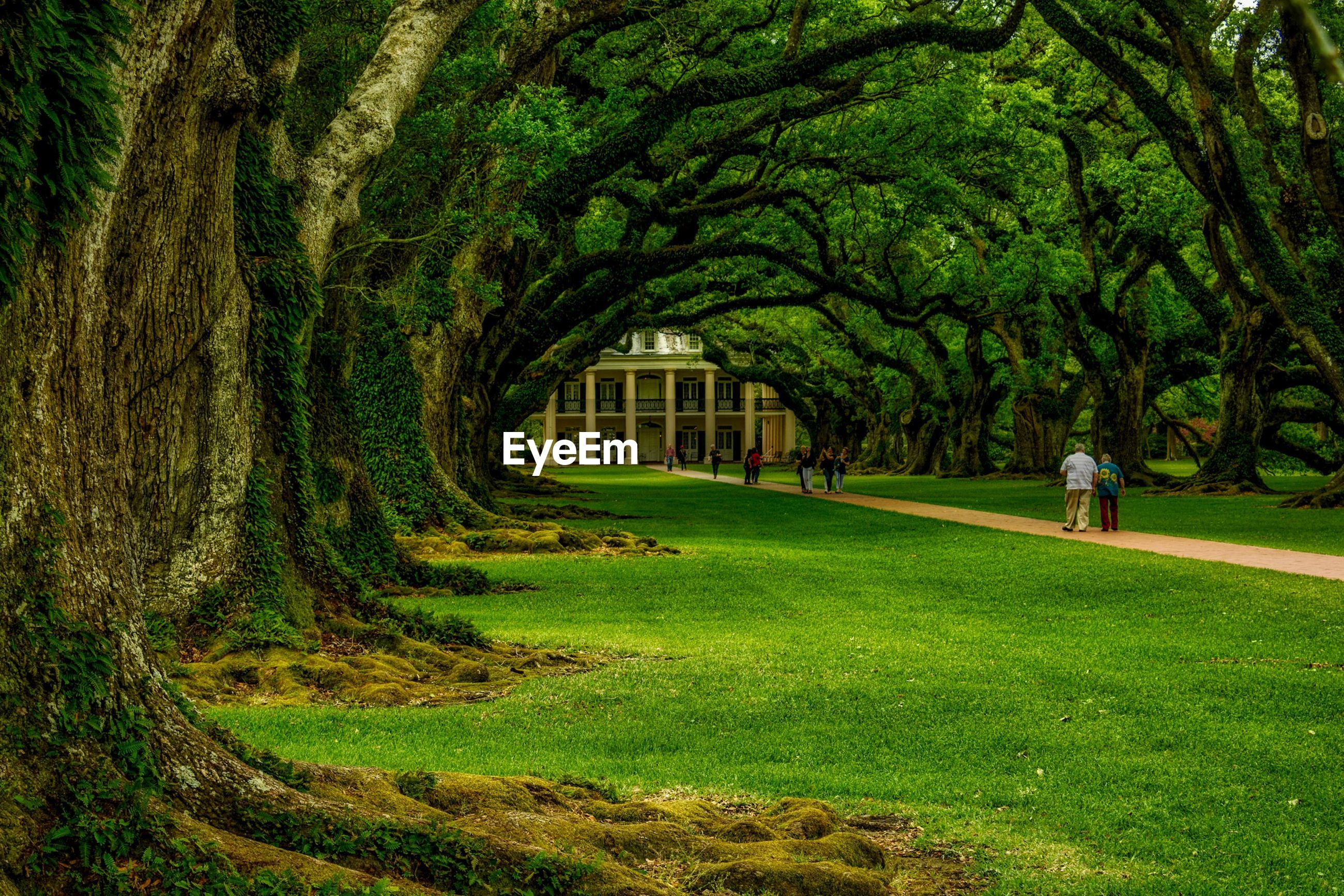 grass, tree, green color, growth, built structure, grassy, architecture, tranquility, field, nature, tree trunk, lawn, building exterior, tranquil scene, landscape, park - man made space, beauty in nature, grassland, day, green