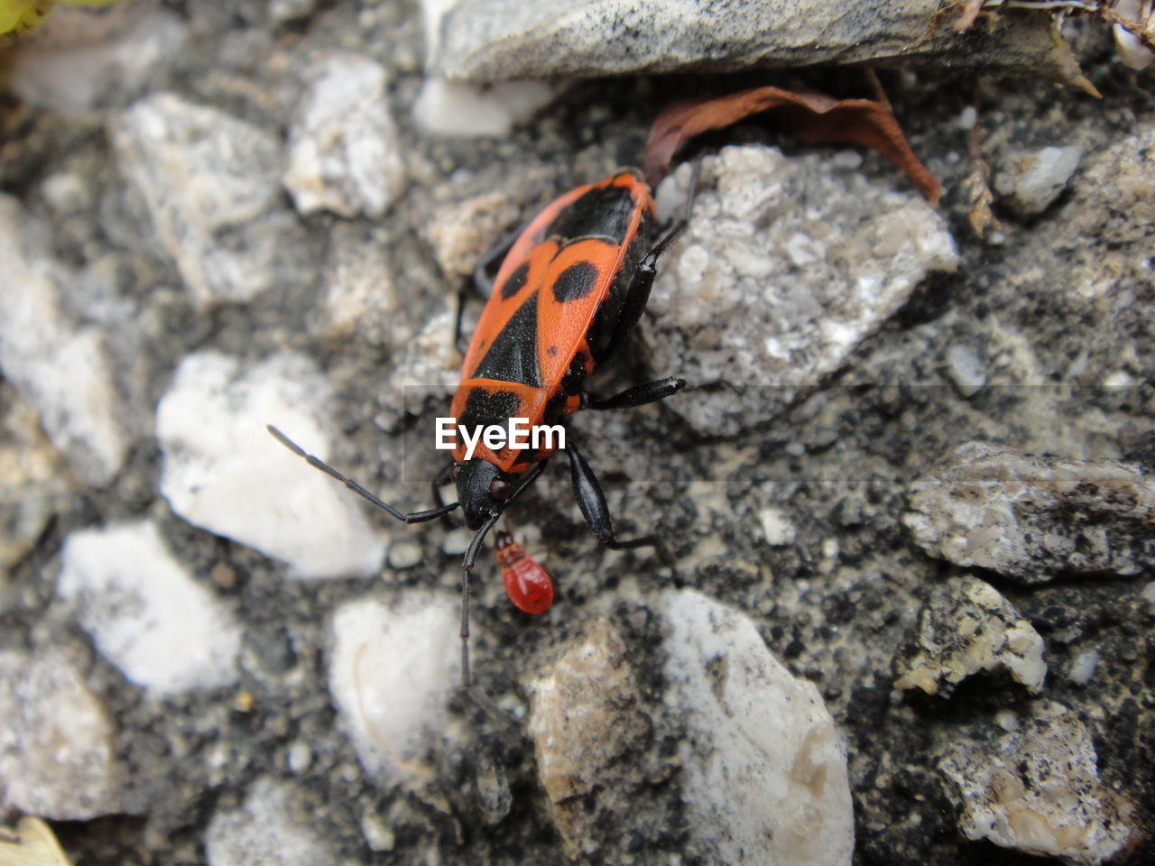Macro Shot Of Insect On Rock