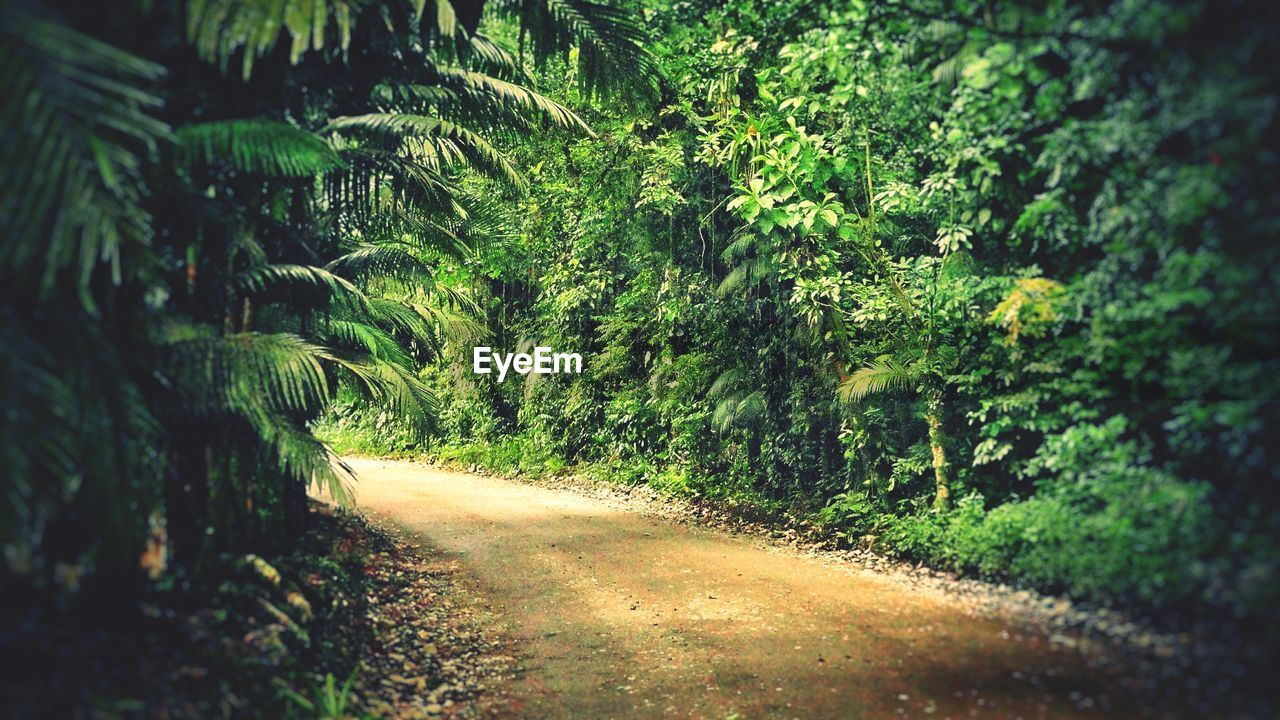the way forward, nature, dirt road, tree, tranquility, road, day, no people, growth, outdoors, tranquil scene, beauty in nature, plant, forest, scenics, landscape, walkway