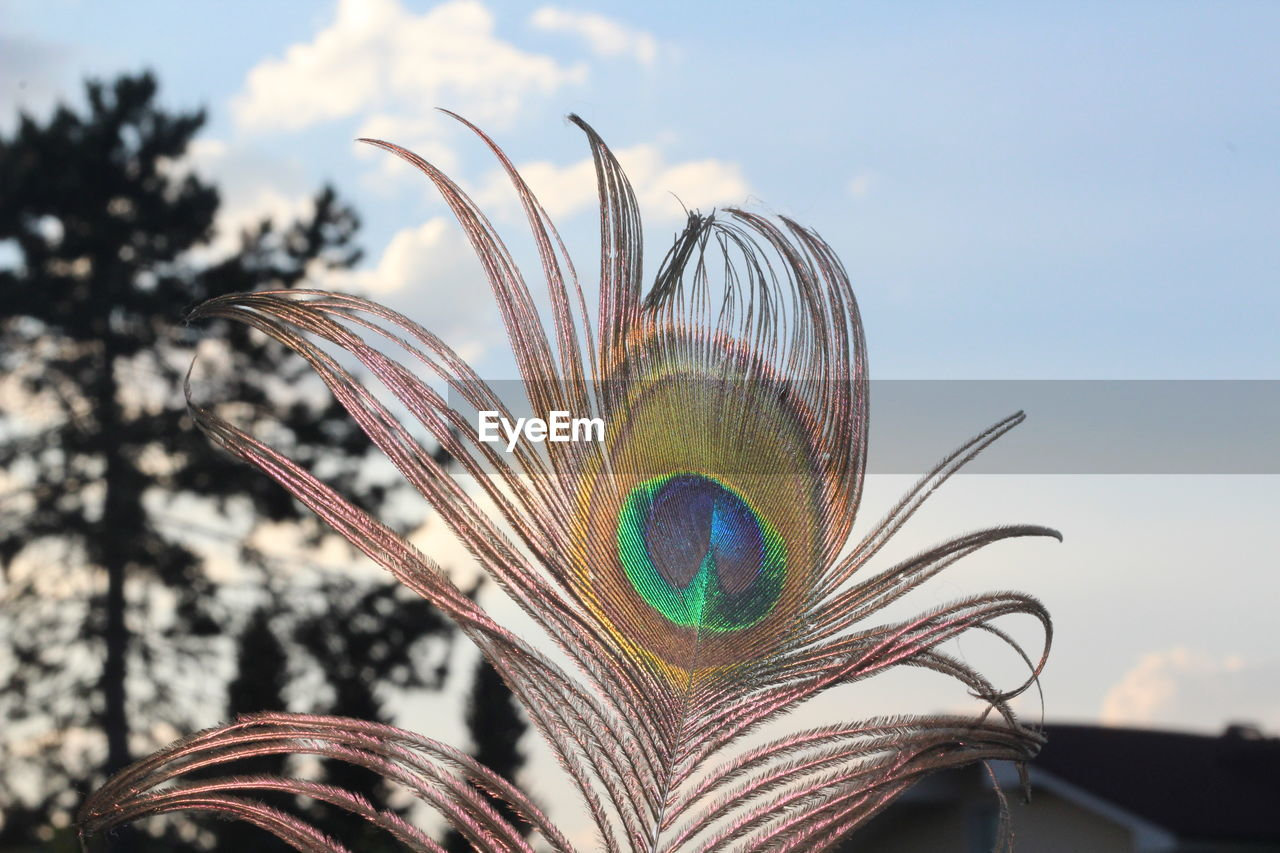 Close-Up Of Peacock Feather Against Sky