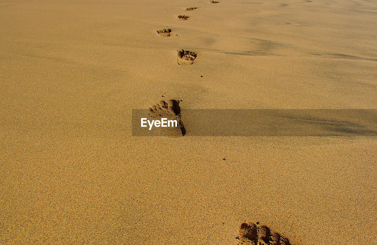 paw print, footprint, sand, animal track, beach, high angle view, no people, nature, track - imprint, outdoors, day, mammal