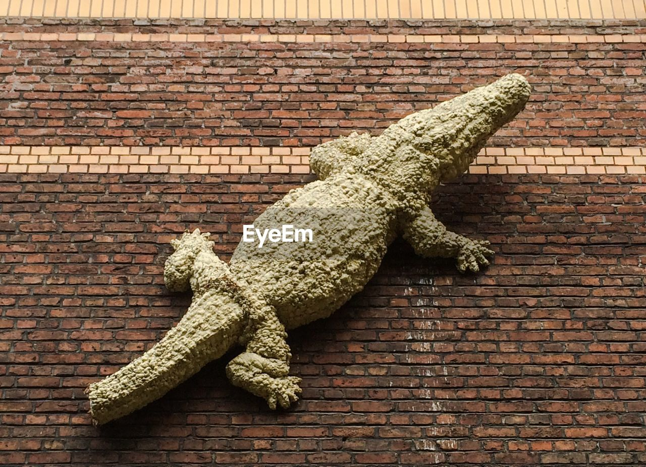 brick wall, reptile, high angle view, animal themes, day, animals in the wild, no people, one animal, outdoors, close-up, nature