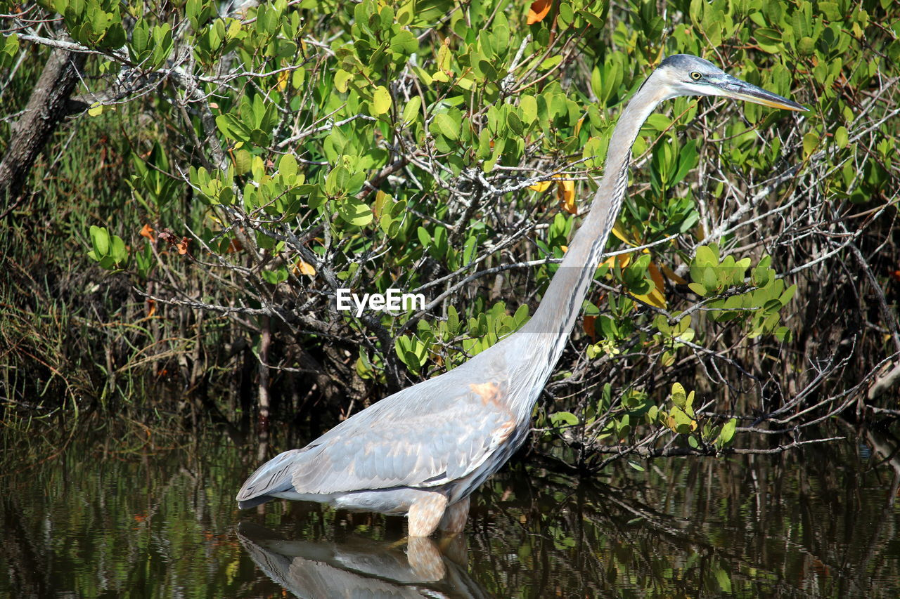vertebrate, animal wildlife, bird, animals in the wild, animal, animal themes, one animal, plant, no people, nature, water, heron, day, tree, land, beak, outdoors, egret, green color, animal neck