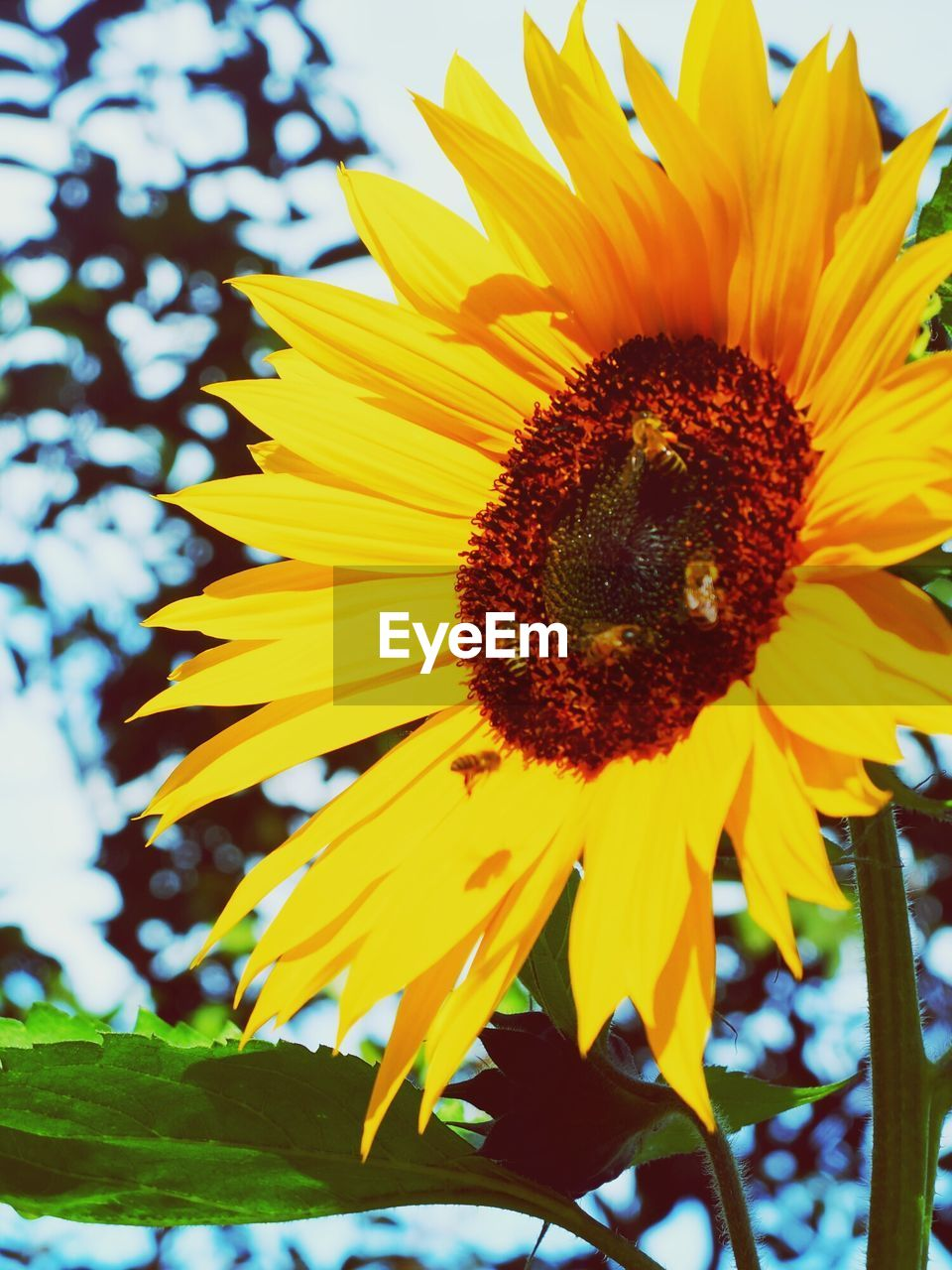 flower, yellow, petal, fragility, beauty in nature, nature, growth, sunflower, flower head, freshness, pollen, no people, close-up, outdoors, plant, day, blooming