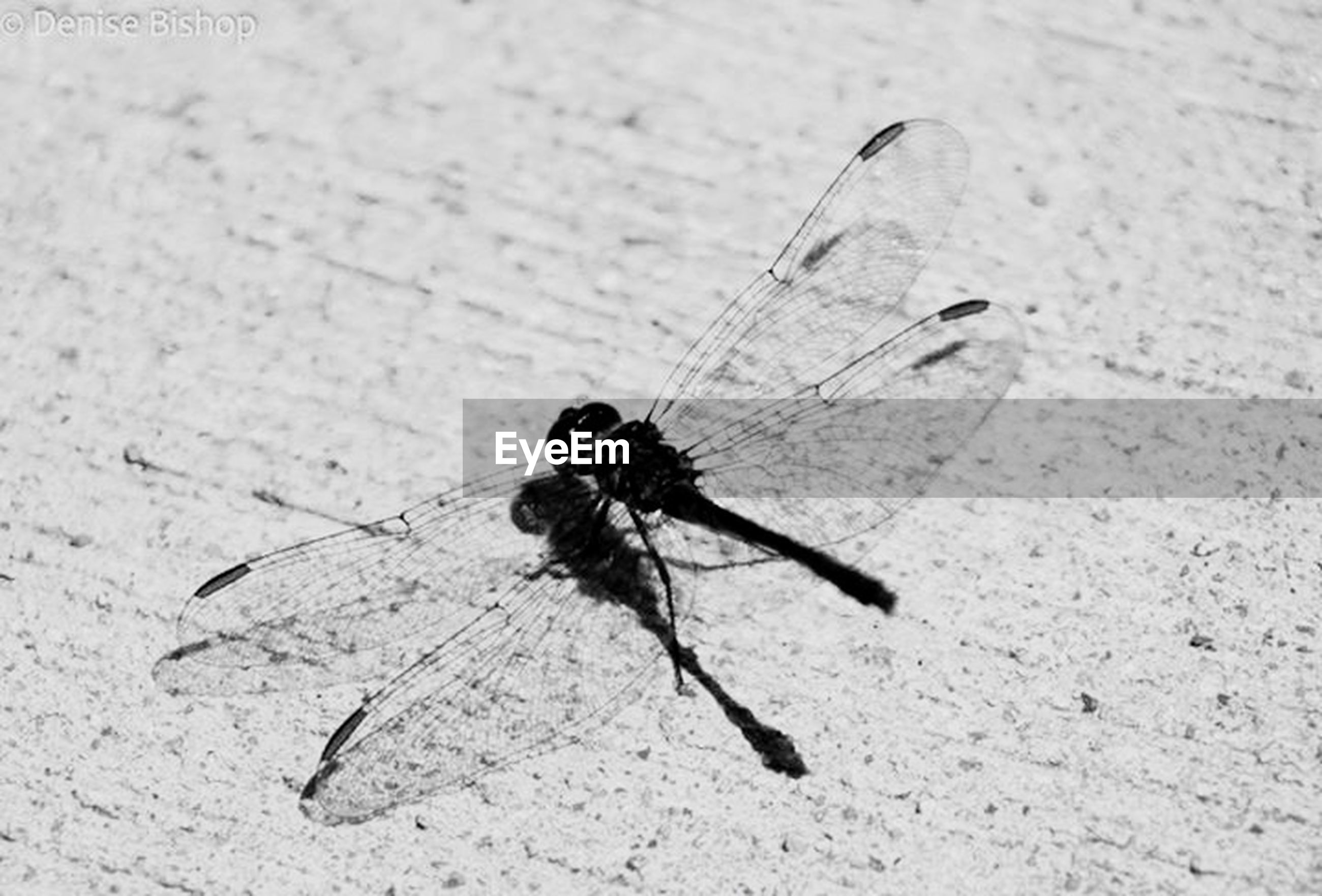 insect, animal themes, animals in the wild, one animal, wildlife, close-up, high angle view, full length, day, animal wing, focus on foreground, no people, outdoors, animal antenna, dragonfly, nature, shadow, sunlight, wall - building feature, selective focus