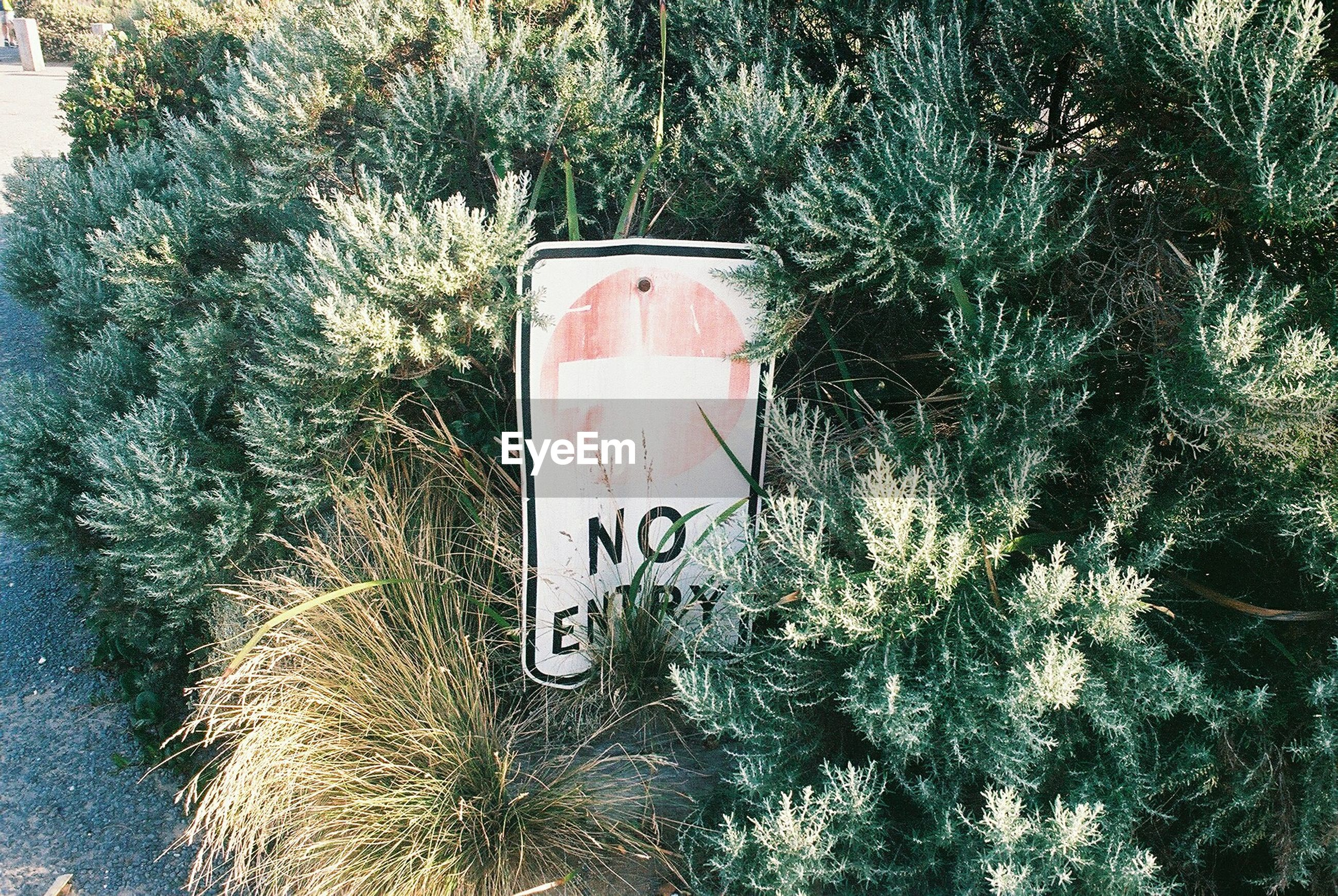 High angle view of do not enter sign on plants
