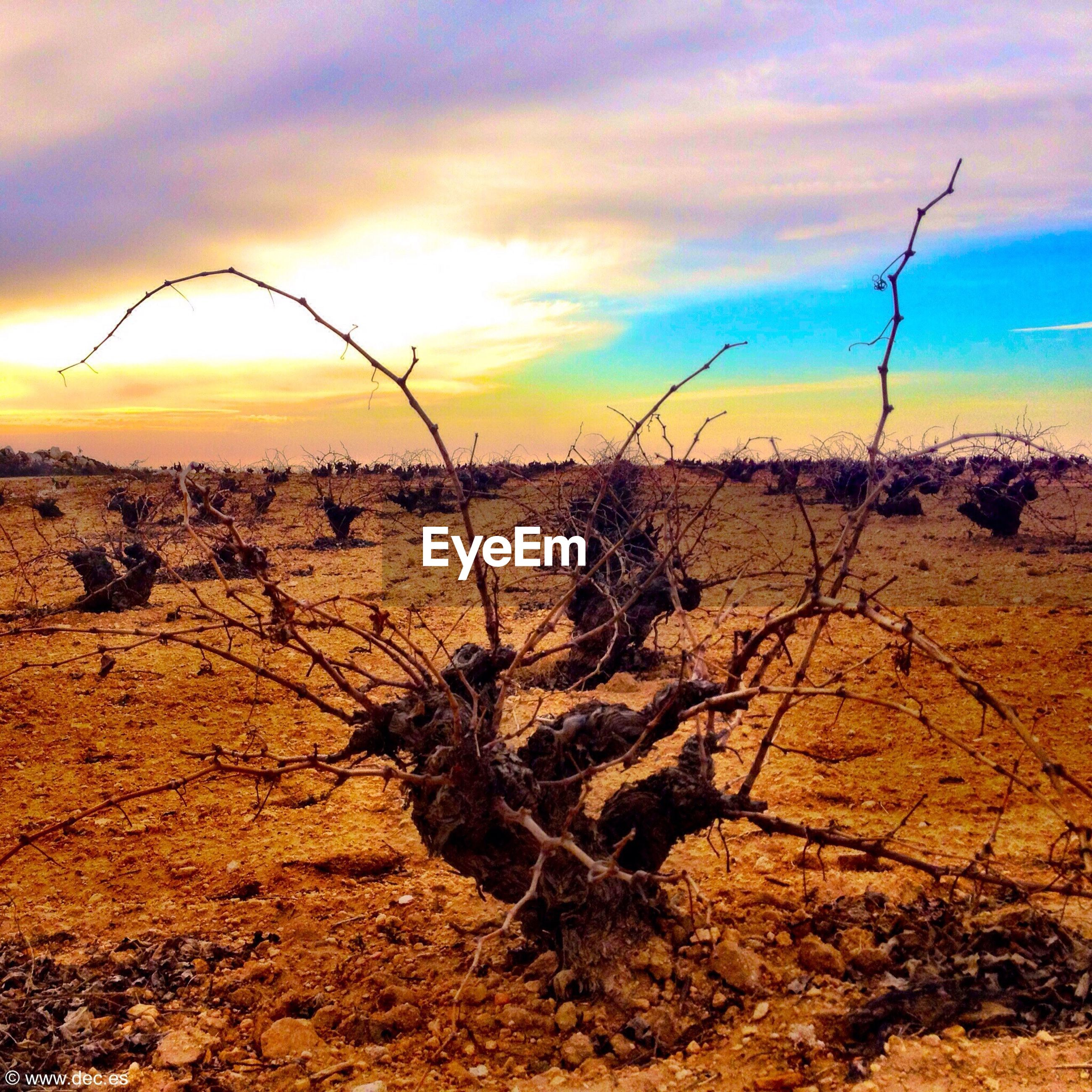 landscape, sky, sunset, tranquil scene, tranquility, field, scenics, nature, cloud - sky, dry, arid climate, beauty in nature, rural scene, dead plant, plant, desert, bare tree, agriculture, cloud, horizon over land
