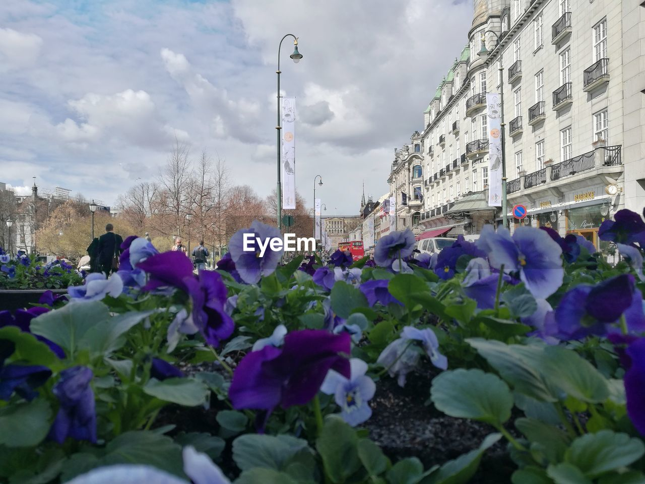 flower, flowering plant, plant, building exterior, city, architecture, nature, built structure, sky, freshness, cloud - sky, growth, day, street, fragility, vulnerability, incidental people, building, outdoors, car, flower head, purple