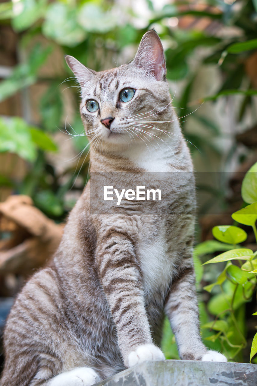 cat, domestic cat, feline, animal themes, animal, mammal, domestic animals, domestic, pets, one animal, vertebrate, portrait, focus on foreground, no people, looking at camera, day, sitting, whisker, looking, close-up, animal eye