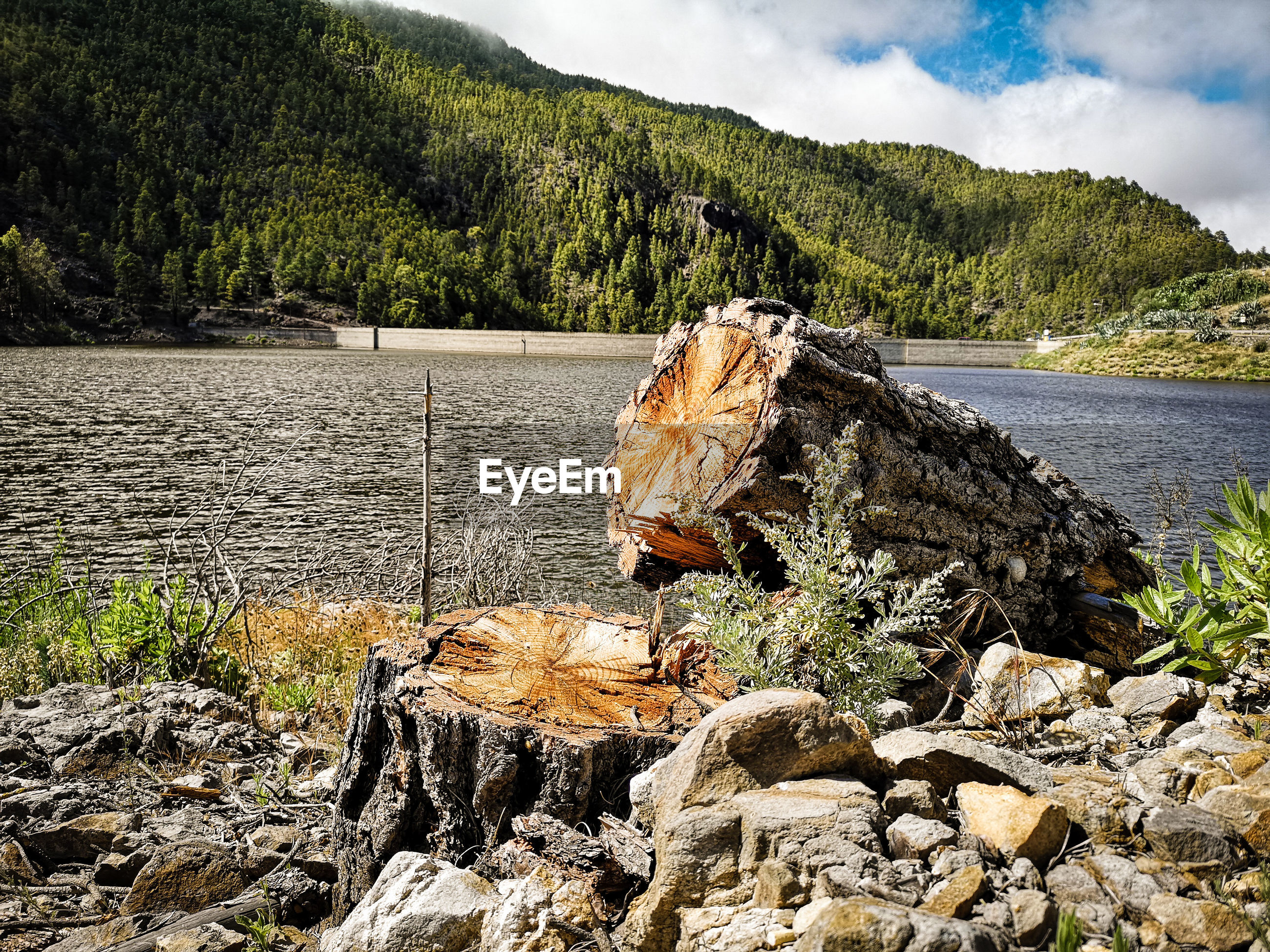 Driftwood and rocks at lakeshore against mountain during sunny day
