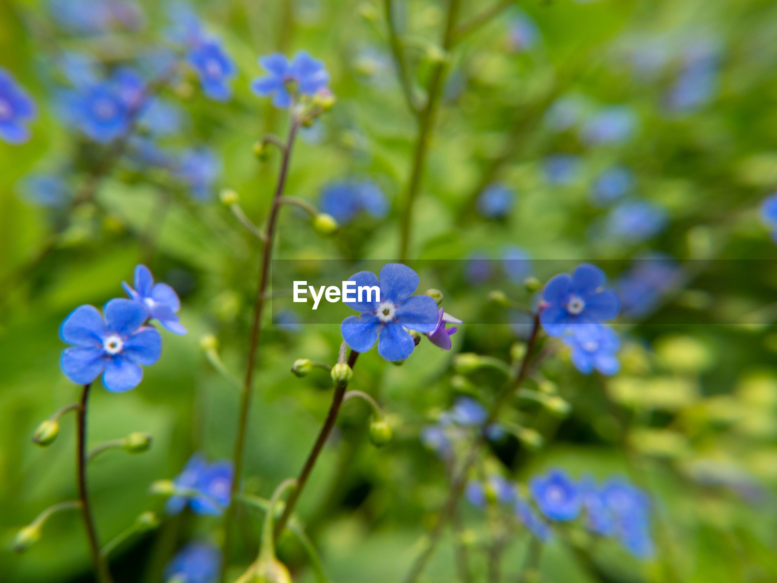 CLOSE-UP OF BLUE FLOWERING PLANTS