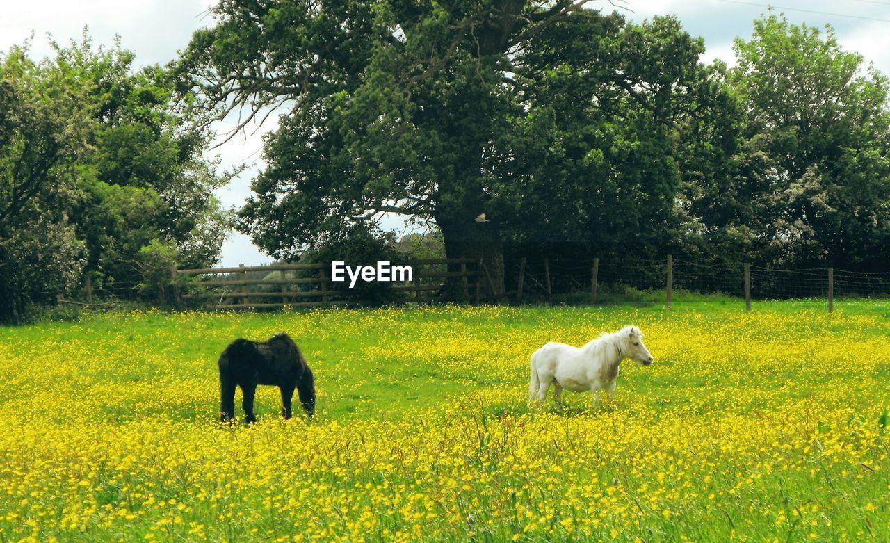 Ponies on field against trees
