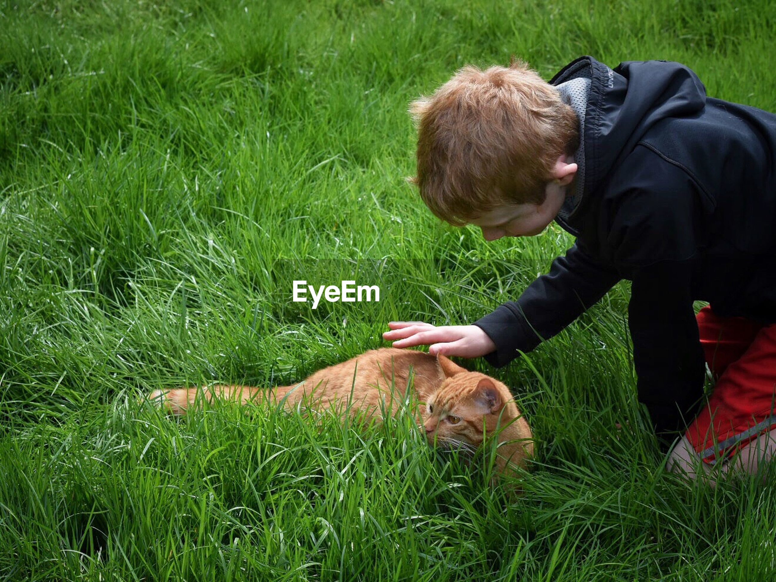 High angle view of boy stroking ginger cat on grassy field