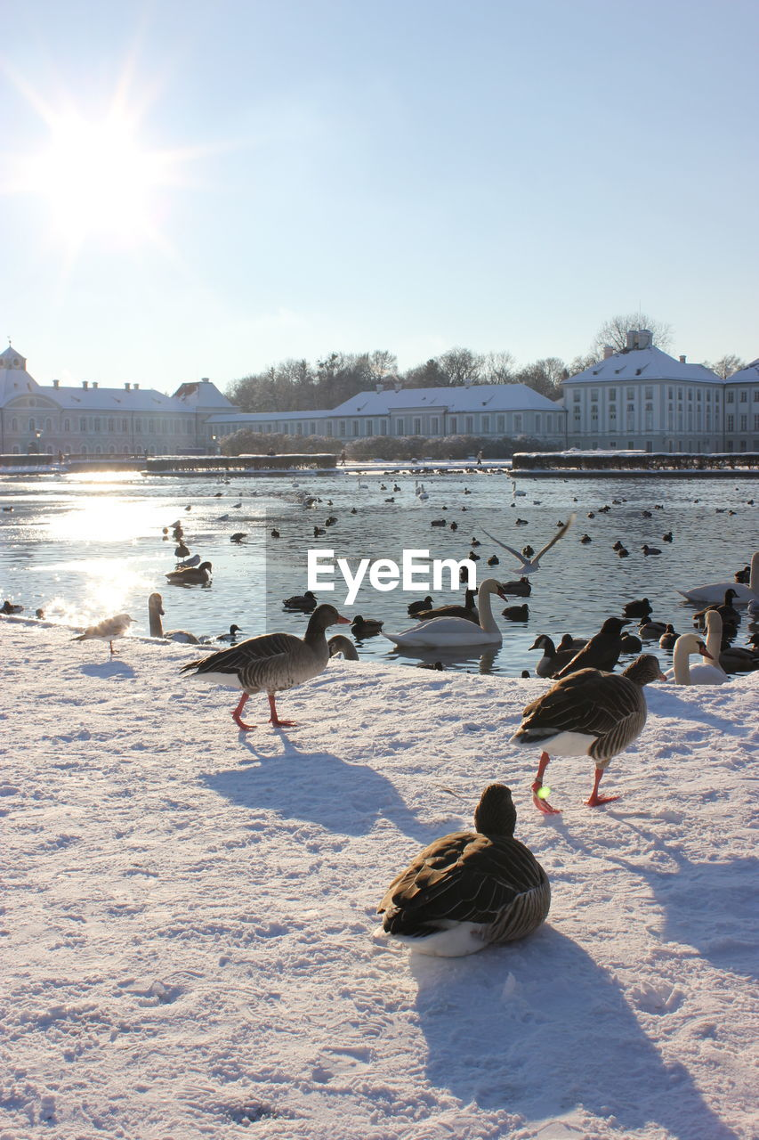 winter, cold temperature, vertebrate, group of animals, bird, snow, animal themes, animal, animals in the wild, water, nature, animal wildlife, sky, lake, large group of animals, beauty in nature, frozen, day, no people, outdoors, duck