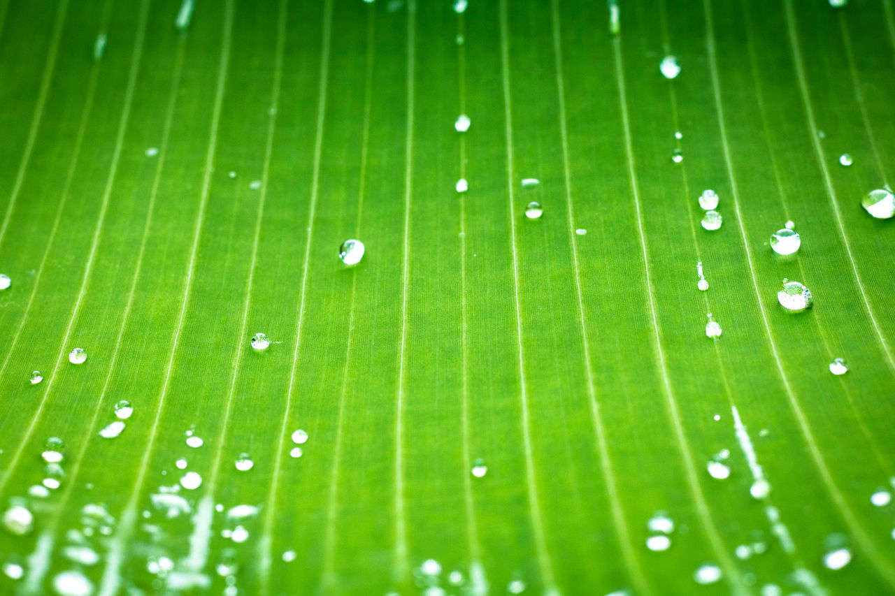 green color, leaf, drop, plant, plant part, close-up, growth, wet, freshness, no people, beauty in nature, nature, water, full frame, rain, dew, vulnerability, backgrounds, day, leaves, outdoors, purity, raindrop, blade of grass