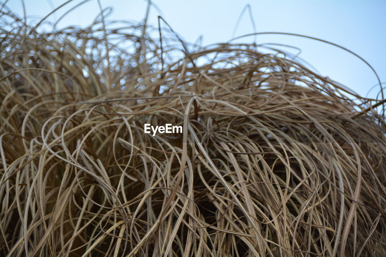no people, straw, day, outdoors, clear sky, hay, agriculture, nature, plant, close-up, growth, sky, hay bale, beauty in nature