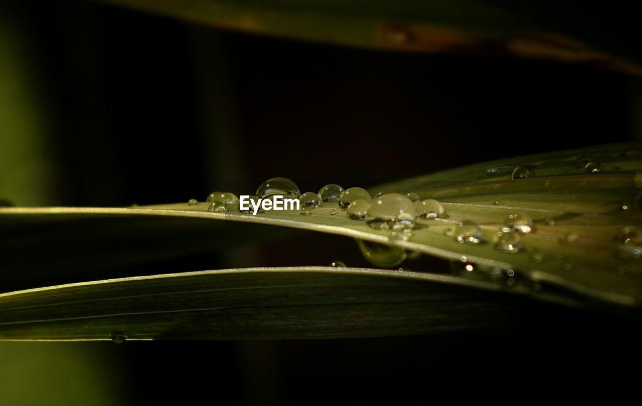 Close-up of dew drops on leaf