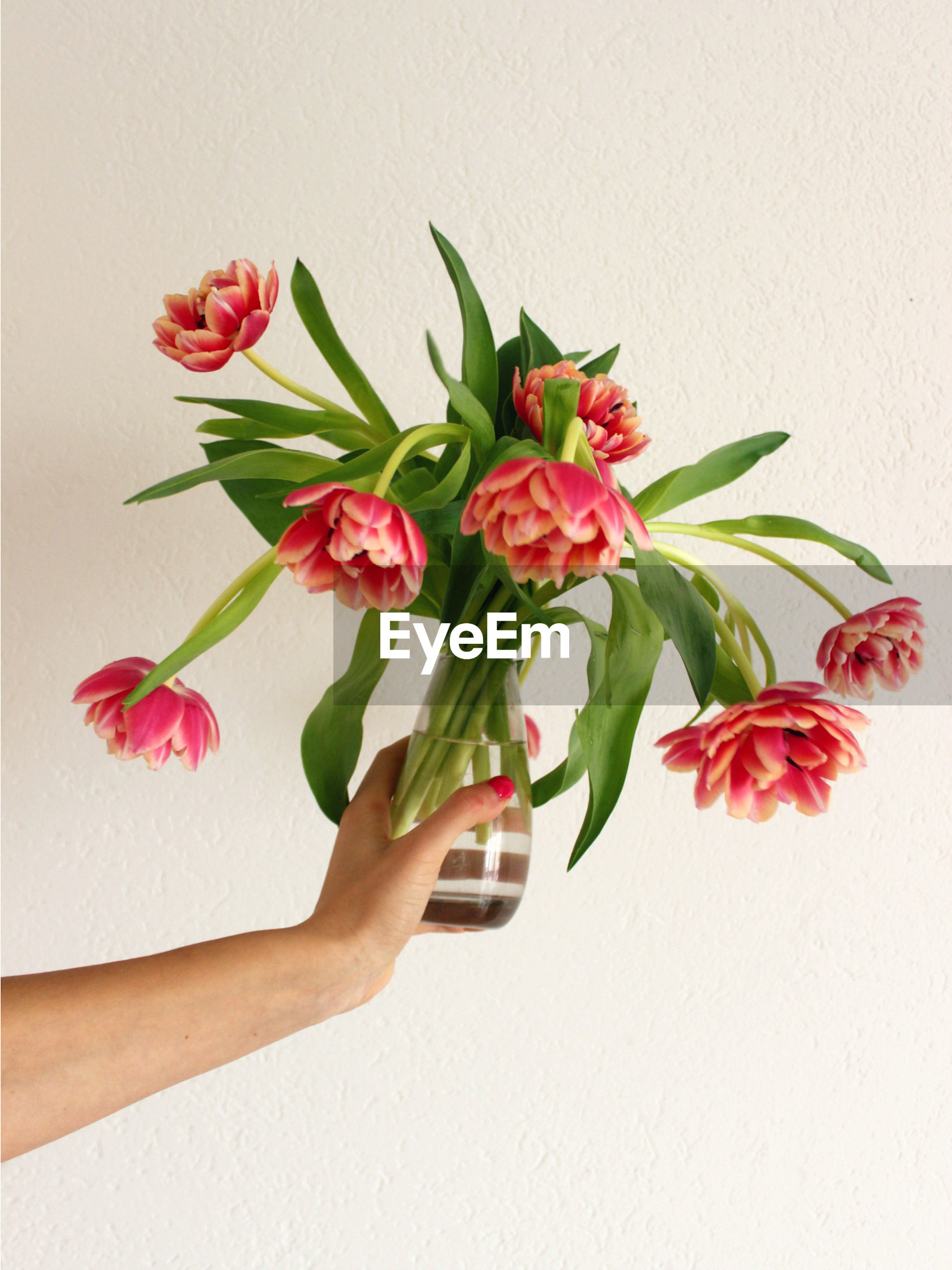 Cropped hand of woman holding pink flowers in vase by wall