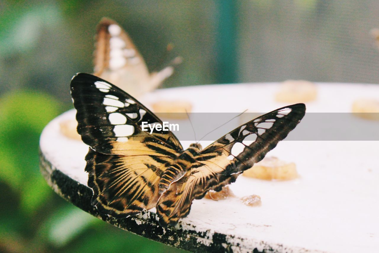 Close-Up Of Butterfly Outdoors