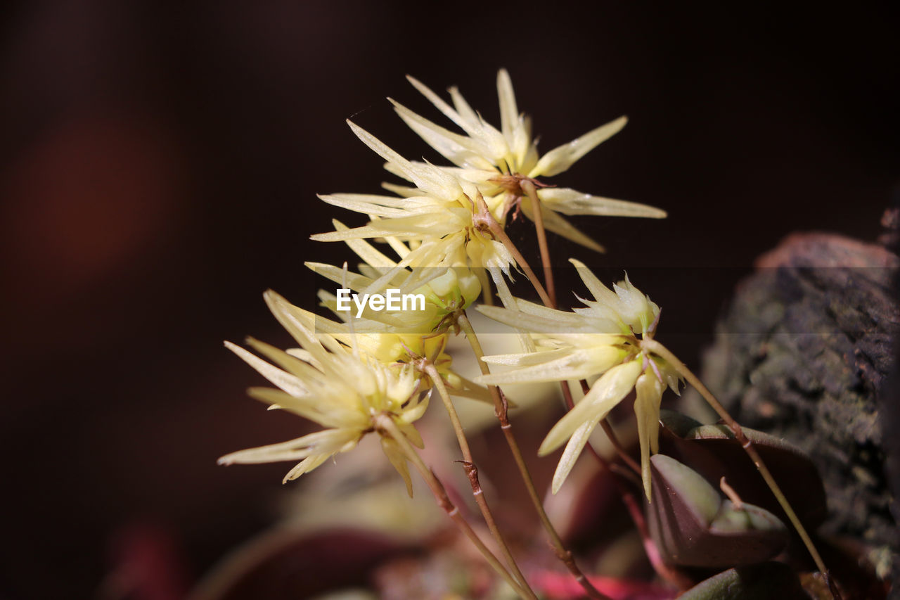 flower, nature, fragility, growth, beauty in nature, close-up, no people, flower head, freshness, petal, plant, outdoors, day