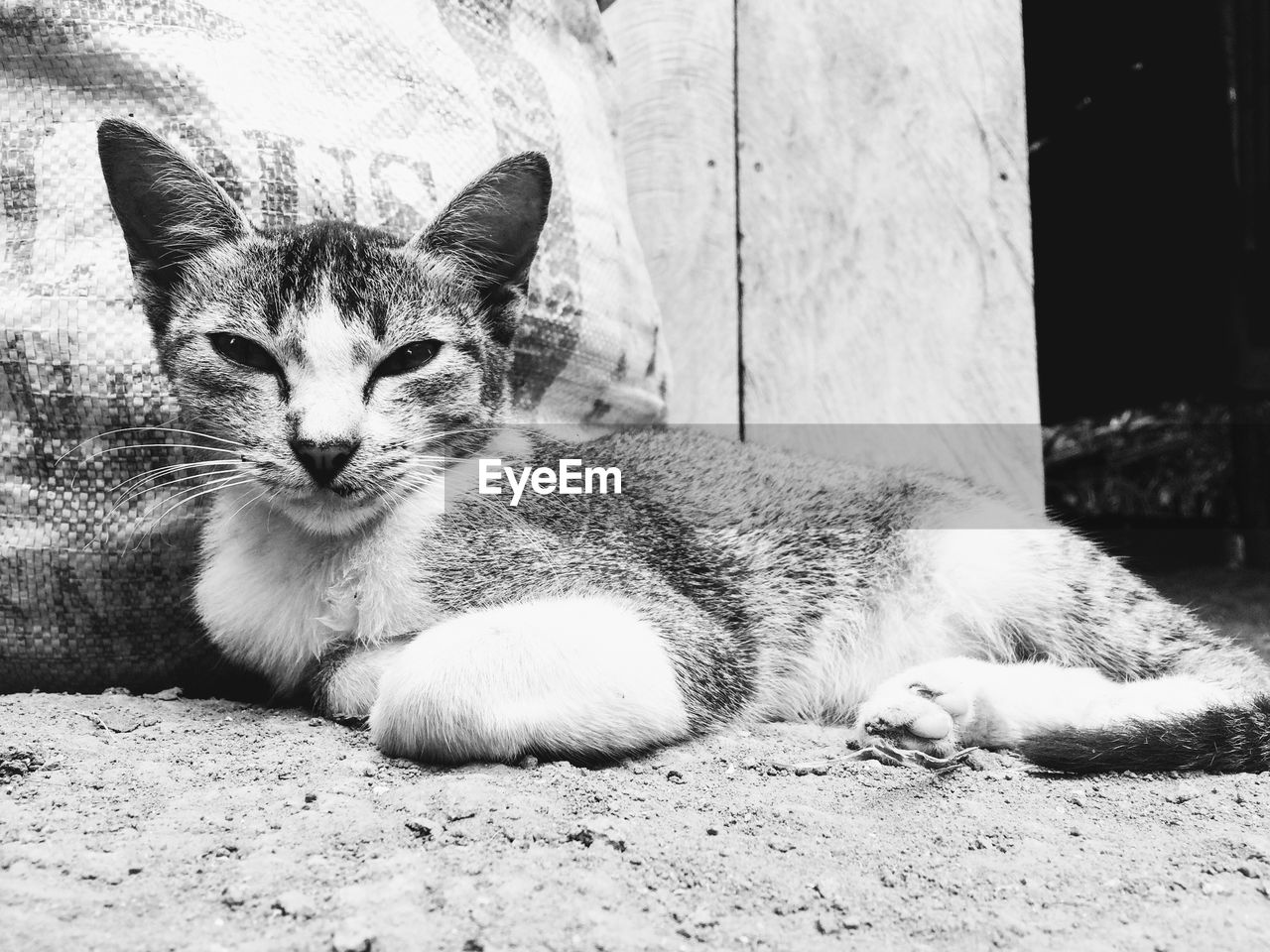 mammal, one animal, domestic, domestic animals, pets, vertebrate, cat, relaxation, domestic cat, feline, resting, no people, lying down, portrait, whisker, day, close-up