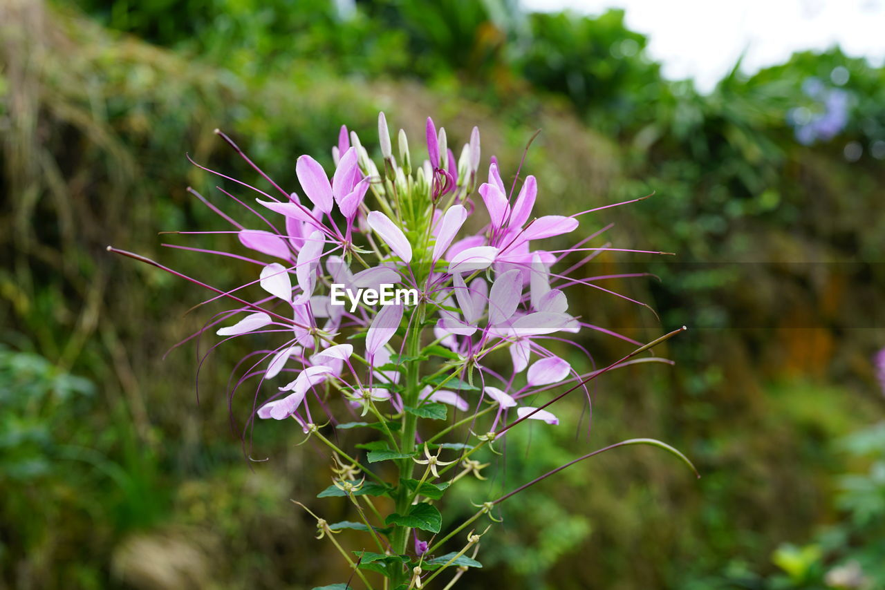 flower, purple, growth, nature, plant, beauty in nature, outdoors, blooming, fragility, no people, day, freshness, close-up, flower head