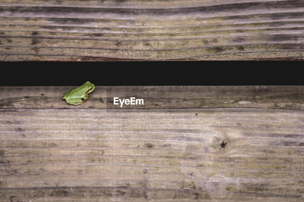 High Angle View Of Frog On Wooden Bench