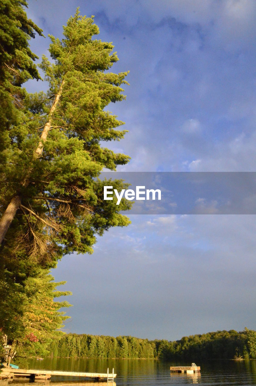 tree, sky, growth, nature, day, outdoors, no people, cloud - sky, beauty in nature, scenics, mountain, architecture, water