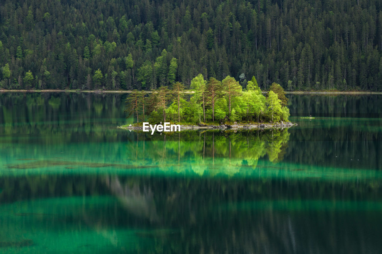 Plants growing in eibsee lake