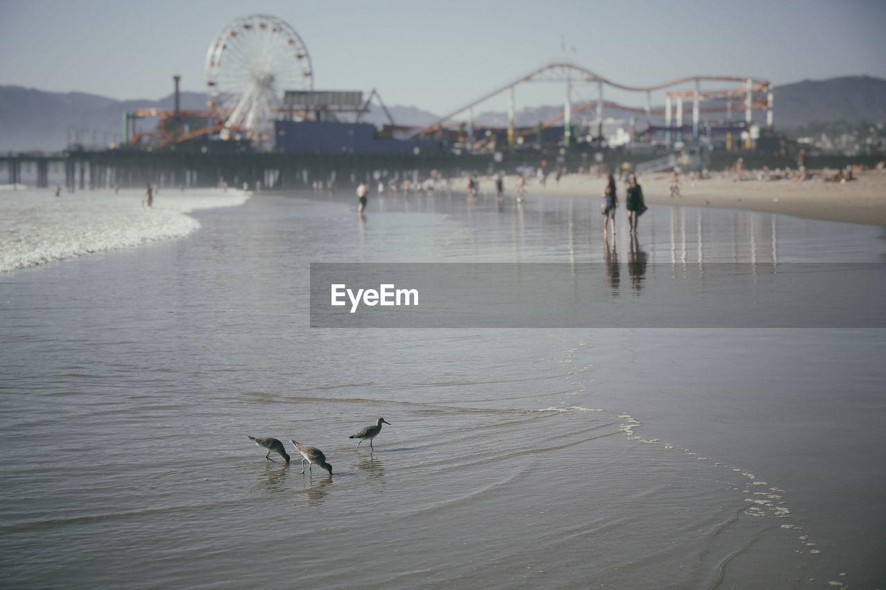 Beach In Santa Monica