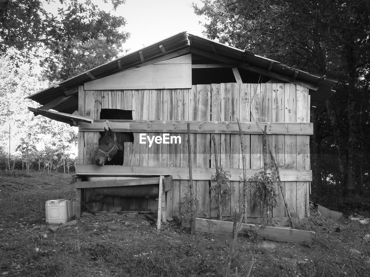 built structure, architecture, plant, building exterior, tree, land, wood - material, nature, day, no people, building, field, house, hut, outdoors, forest, old, sky, log cabin, abandoned, cabin