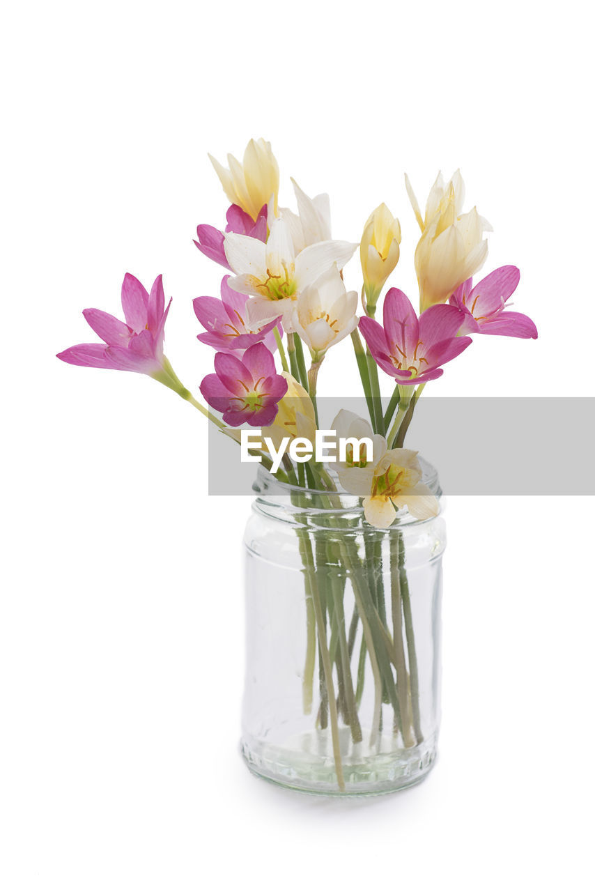 flowering plant, flower, white background, studio shot, vulnerability, plant, fragility, petal, freshness, beauty in nature, indoors, close-up, glass - material, vase, flower head, still life, inflorescence, nature, no people, cut out, pink color, purple, flower arrangement, bunch of flowers, bouquet