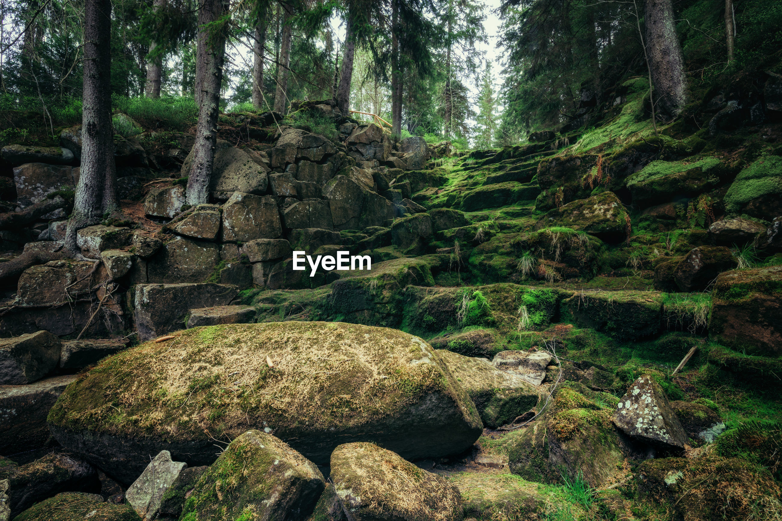 Moss covered rocks by trees in forest