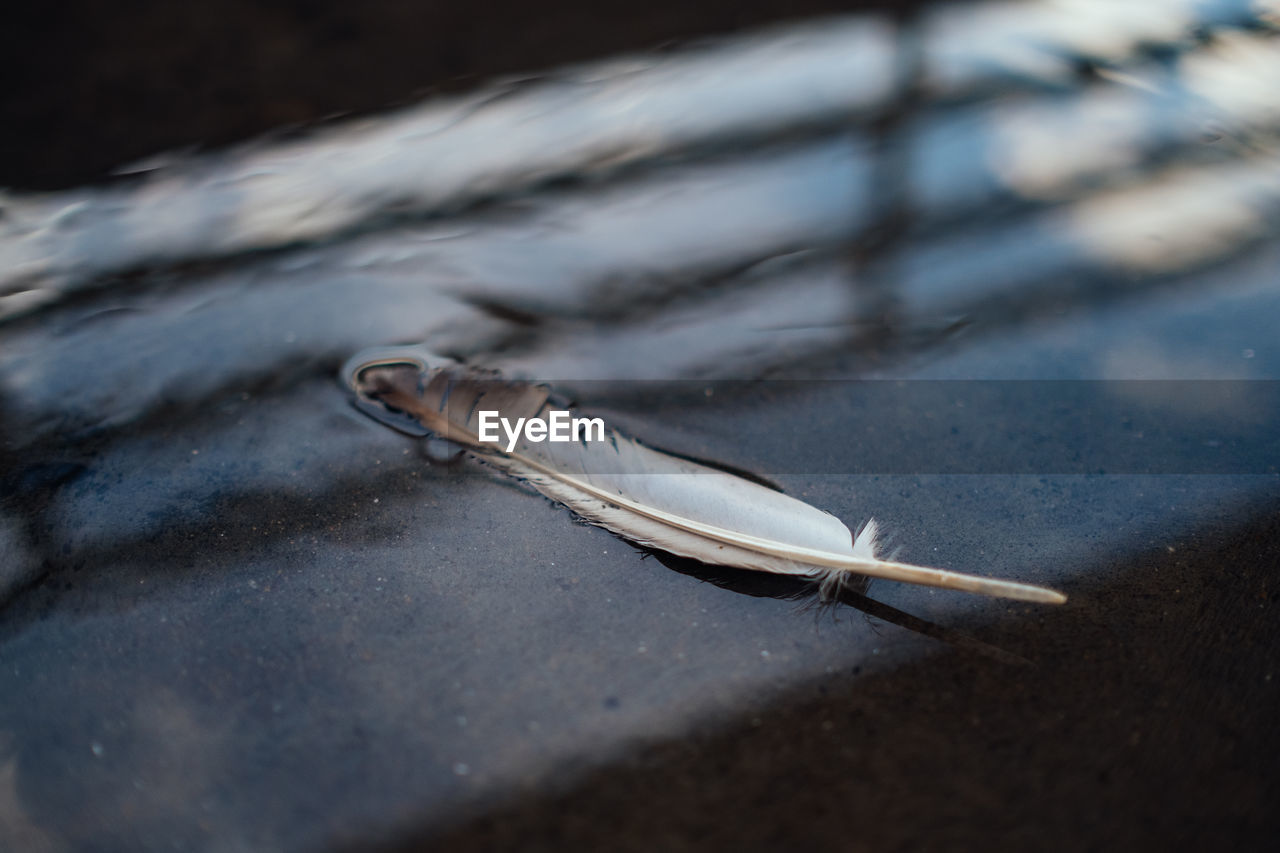 no people, selective focus, close-up, feather, day, still life, nature, lightweight, outdoors, animal, communication, high angle view, softness, table, flooring, single object, road, wood - material, fragility, surface level