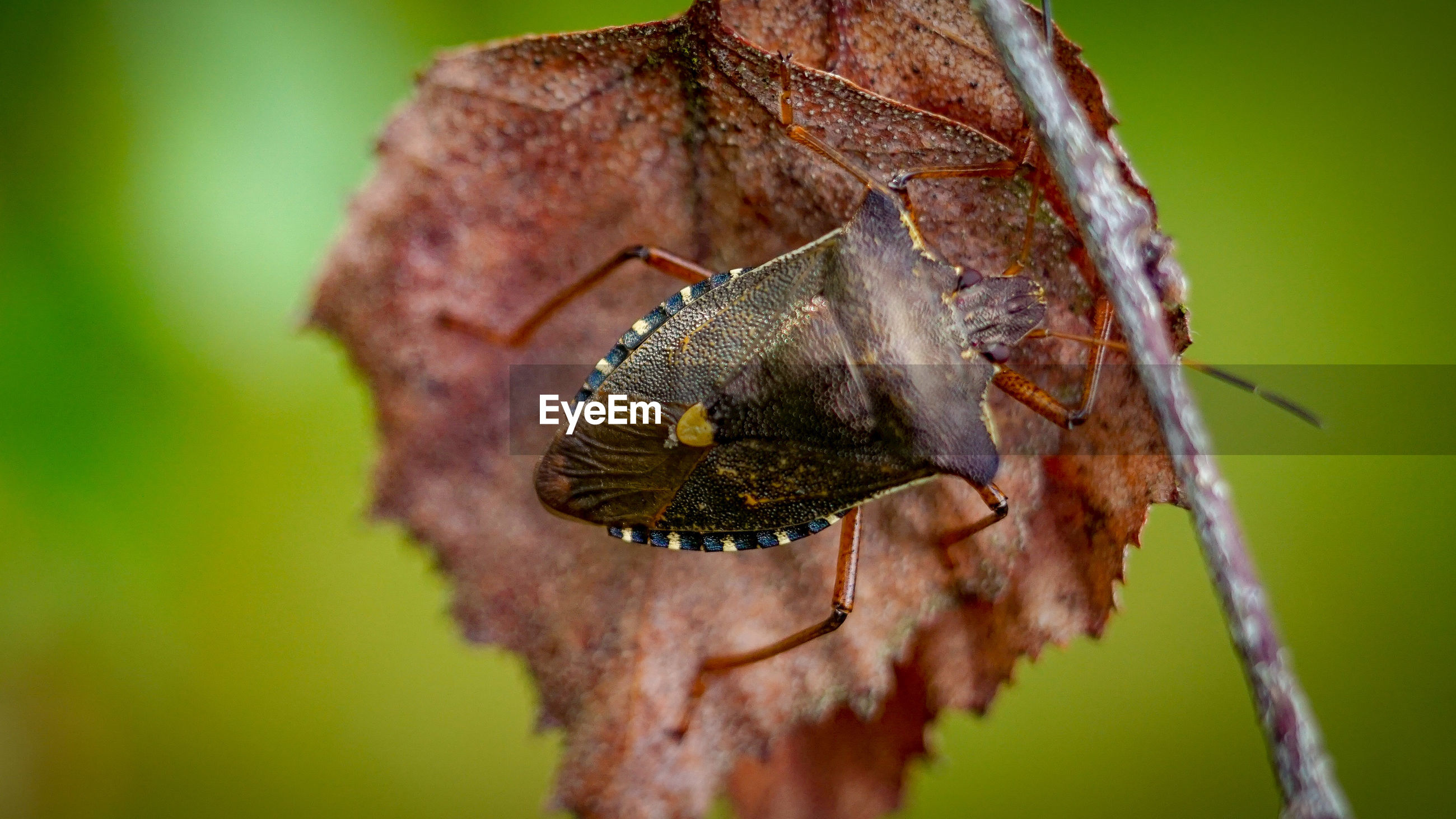 Close-up of insect on a leaf
