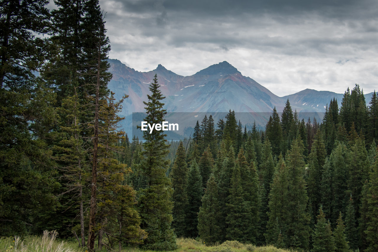 Scenic view of pine trees by mountains against sky