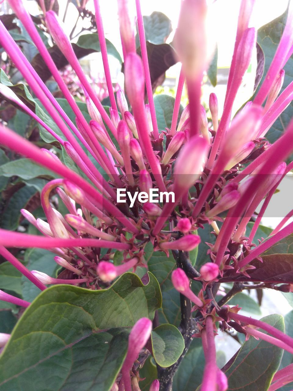 growth, flower, beauty in nature, nature, pink color, fragility, petal, freshness, plant, botany, blossom, no people, selective focus, close-up, flower head, day, outdoors, springtime, leaf, branch, blooming, tree