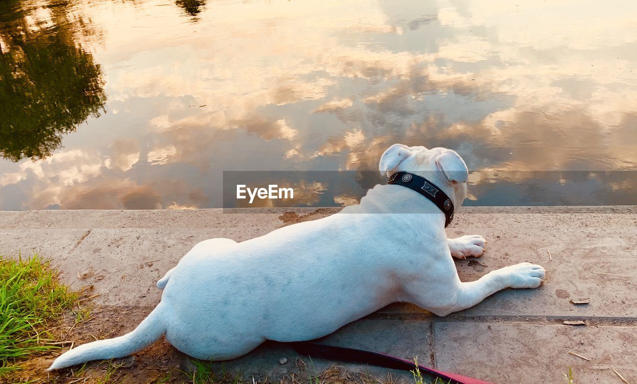 one animal, domestic, mammal, animal themes, domestic animals, pets, animal, canine, dog, vertebrate, water, day, no people, nature, rear view, collar, pet collar, lake, looking away