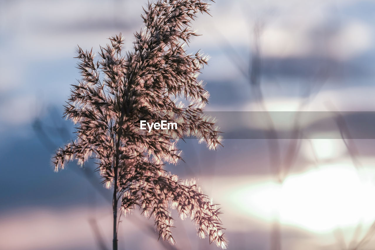 CLOSE-UP OF PLANT AGAINST SKY IN WINTER