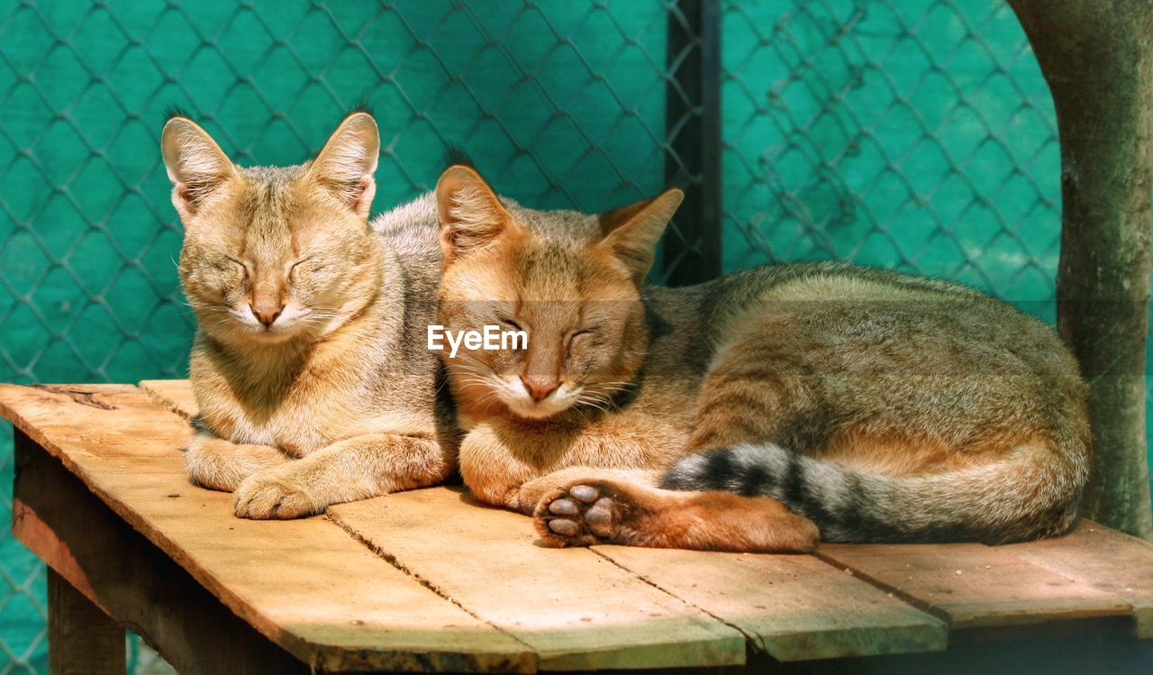 cat, feline, mammal, pets, domestic animals, relaxation, domestic cat, domestic, animal themes, animal, vertebrate, group of animals, eyes closed, no people, resting, sleeping, close-up, two animals, wood - material, ginger cat, whisker